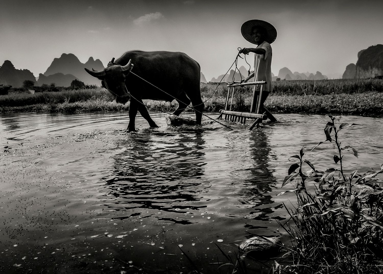 Jose-Ramon_Luna-_De-la-Ossa_-Preparacion-del-arrozal.