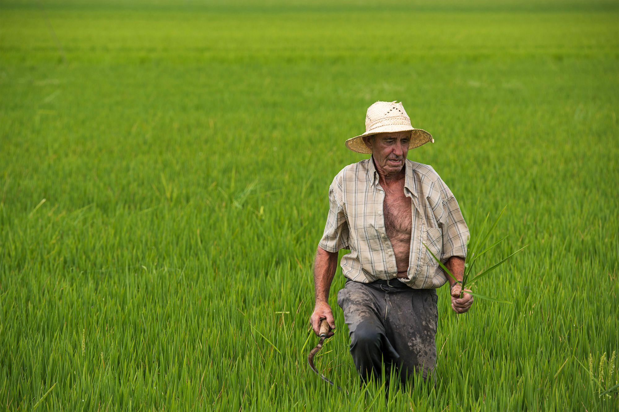 Miguel-Angel_Perez_Herrero_-En-los-campos-de-arroz.