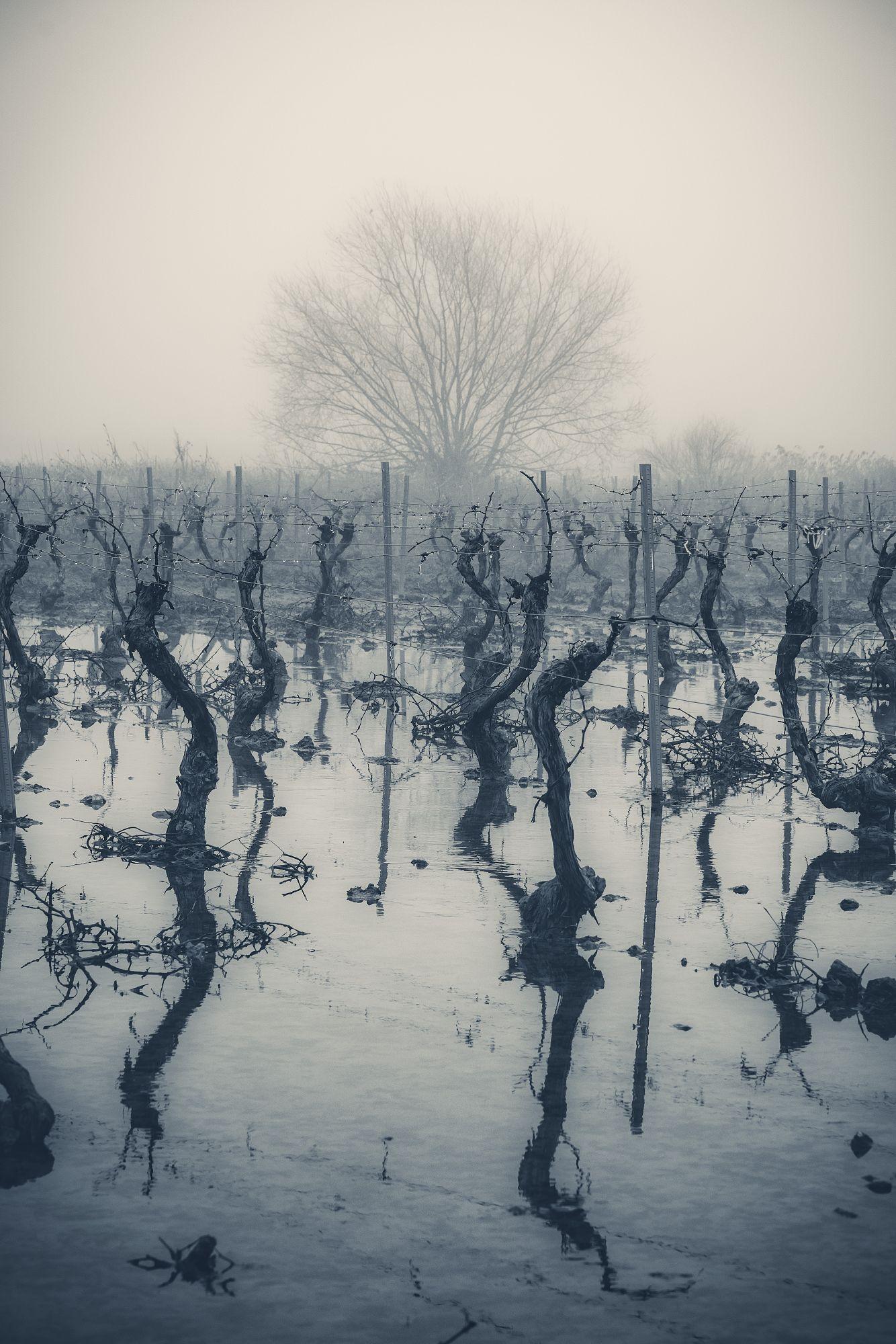 Roberto_De-la-Fuente_Ramos_Duro-invierno