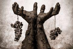 Juan-Miguel_Ortuno_Martinez_Hombre-y-tierra.El-fruto-de-lo-sostenible.-1er-premio-y-oro-FAF